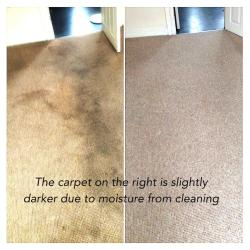 Cleaned carpet