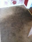 rapid resoiled carpet