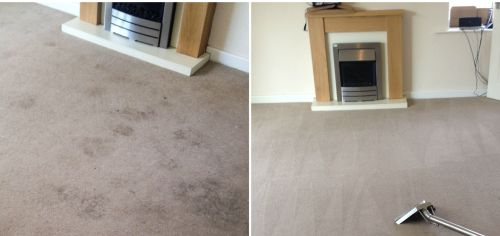 pet stains cleaned in wakefield